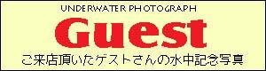 ゲストさんの水中記念写真