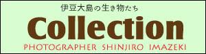 伊豆大島の生き物たちコレクション