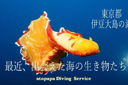 最近出会えた海の生き物たち