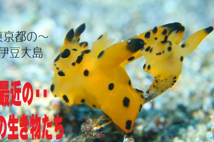 最近の海の生き物たち・水中動画