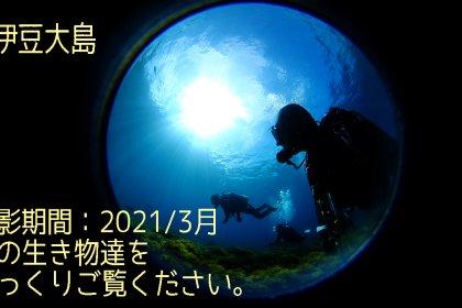 2021年3月水中動画