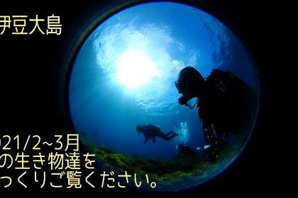 最近の伊豆大島の海